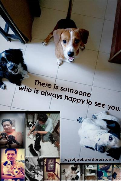dogs photo, writing about dogs, unconditional love, dogs quotes, dogs are family